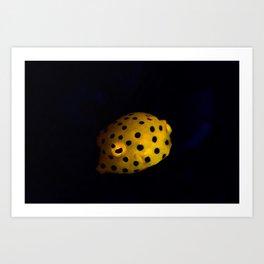 Baby yellow-spotted boxfish Art Print