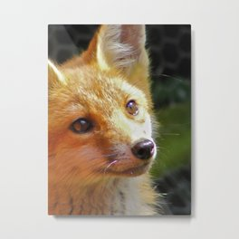 Fox Cub Metal Print