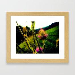 Teasel Glow Framed Art Print