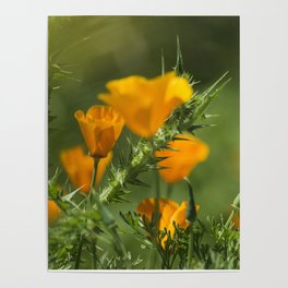 Blurry Poppies Poster