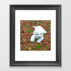 Teddy In Autumn Framed Art Print