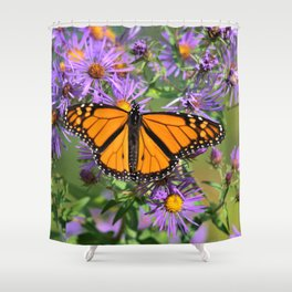 Monarch Butterfly on Wild Aster Flower Shower Curtain