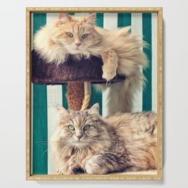 Siberian cats on the cat tree Serving Tray
