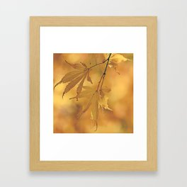 Autumn Gold Framed Art Print