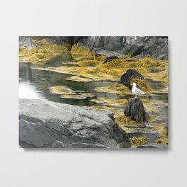 Yellow Seagull Metal Print