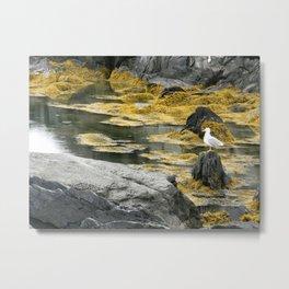 Yellow Seagull Metal Print