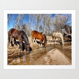 Apache Creek Ponies Art Print