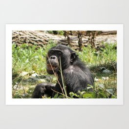 Grin Chin Chimp Art Print