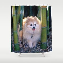 Buffy, the Celebrity Pomeranian, in Bamboo Forest Shower Curtain