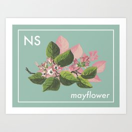 Provincial Flowers - Nova Scotia Art Print