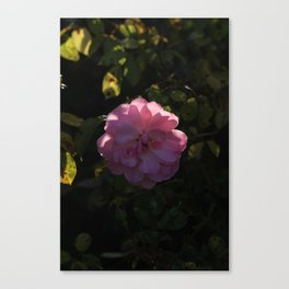 Pink Champagne Canvas Print