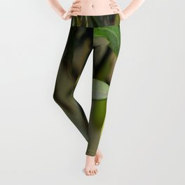 Olives On A Branch Leggings