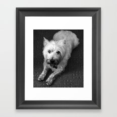 Odie (B/W) Framed Art Print