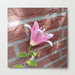 Pretty Pink Lily on Brick Wall Metal Print