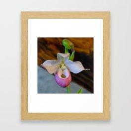 Lady's Slipper by Teresa Thompson Framed Art Print
