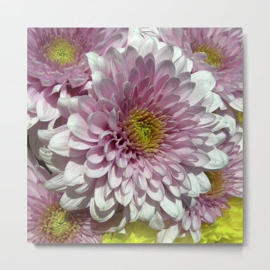 dahlia bloom XII Metal Print