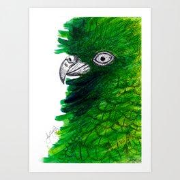 New Zealand Cheeky Kea Art Print