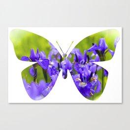 Iris Butterfly  Canvas Print