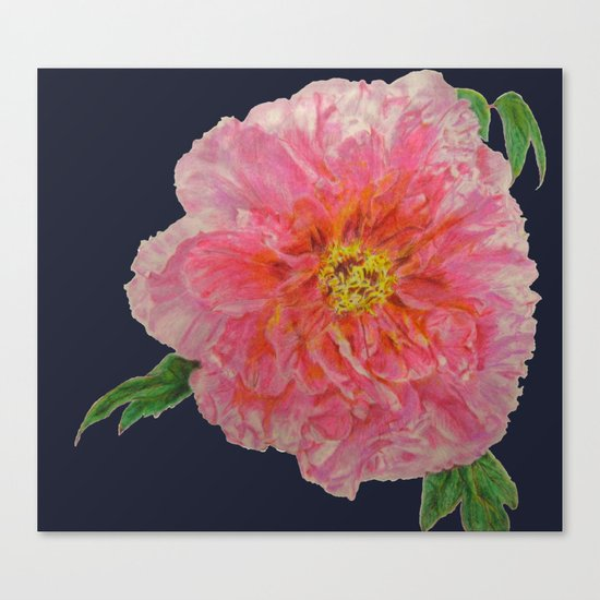 Pink Peony Flower Drawing on Blue Background Canvas Print