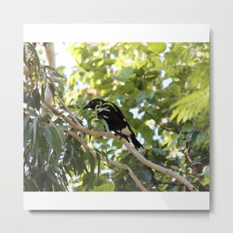 The Currawongs are Coming Metal Print