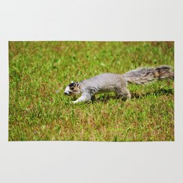 Southern Fox Squirrel Rug