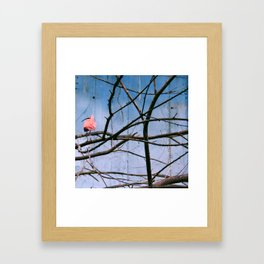 Pink Flamingo and Blue Wall Framed Art Print