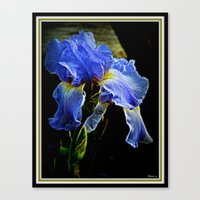 iris Canvas Prints featuring Iris by elkart51
