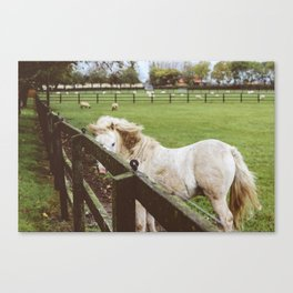 Horse in Athy, Ireland Canvas Print