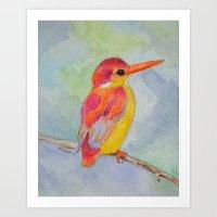 Rufous-backed Kingfisher Art Print