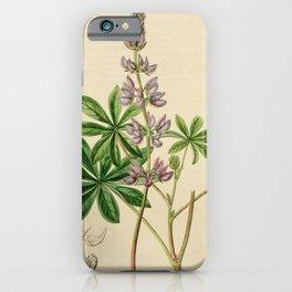 Flower 1891 lupinus latifolius Broad leaved Lupine20 iPhone Case