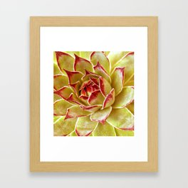 Suculenta Framed Art Print