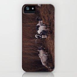 Goats in the wild, Groningen, Netherlands iPhone Case