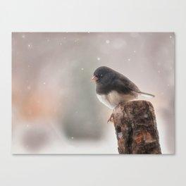 Winter Birds - Junco Canvas Print
