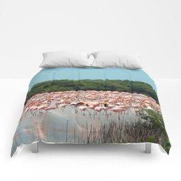 Flamingo Landing Comforters