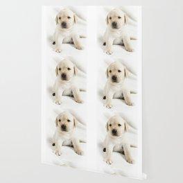 Golden labrador puppy Wallpaper
