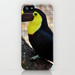 Swainson's Toucan iPhone Case