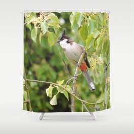 Red-Whiskered Bulbul -- 2 Shower Curtain
