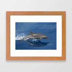 Dolphin Photo Framed Art Print