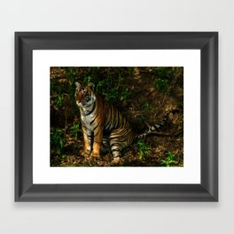 The Royal Bengal Tiger  Framed Art Print