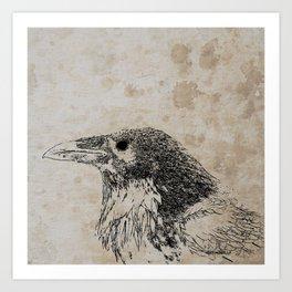 Raven Sketch Art Print