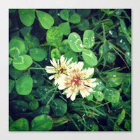 clover Canvas Prints featuring Clover by Amber Dawn Hilton