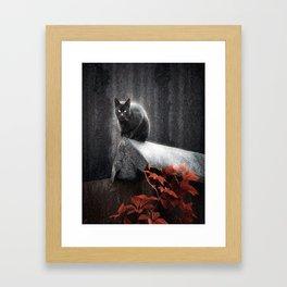BLACK CAT II Framed Art Print