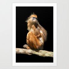 Banded Leaf Monkey Howletts Art Print