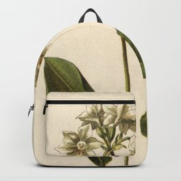 1800s Lithograph Amazon Lily, Eucharis Amazon Grandiflora Flower Backpack