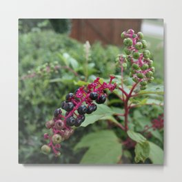 Pretty Deadly-Pokeweed DPG150828a Metal Print