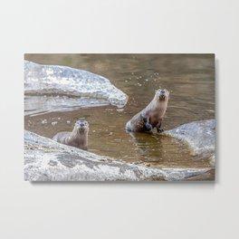 Smith Rock Otters, River, Metal Print