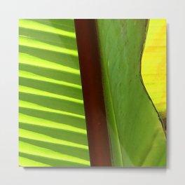 Fine Art Abstract Modern Leaf Close-Up Art Photo Metal Print