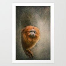 Little Golden Headed Lion Tamarin Art Print