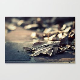 Sunlight Leaves Canvas Print