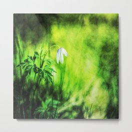 A white wood anemone flower in green Metal Print
